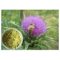 Quality Silymarin Herbal Plant Extract Milk Thistle Powder From Seed Light Yellow Anti - Cancer wholesale