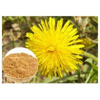 Quality Dandelion Root Plant Extract Powder Flavones Improving Immunity For Dietary Supplement wholesale