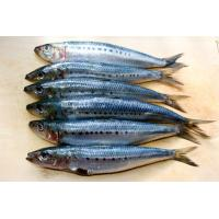 Quality Frozen sardine(head off and gutted) wholesale