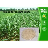 Quality Rimsulfuron 25% WDG Selective Weed Killer For Lawns / Selective Herbicide For Maize wholesale