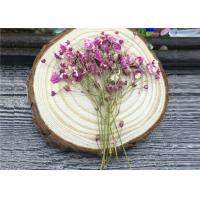 Quality DIY Handmade Long Dried Flowers , Babys Breath Materials Real Dried Flowers wholesale