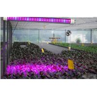 Quality Indoor Agriculture Garden T8 Led Tubes Blue Red Led Plant Grow Light Tube wholesale
