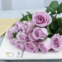 China Fresh cut roses natural flowers wholesale prices export fresh cut blue roses ocean song PURPLE rose on sale