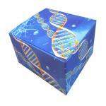 Quality Bespoke Full Color Custom Corrugated Shipping Boxes Embossed Logo Multi - Shape wholesale