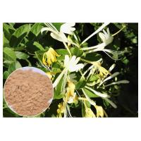Quality Anti Bacterial Natural Flower Extracts Chlorogenic Acid 5% Honeysuckle Flower Extract Powder wholesale