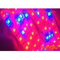 Quality FPC 4 Red 1 Blue LED Strip Plant Lighting / 300D LED Grow Strip Lights wholesale