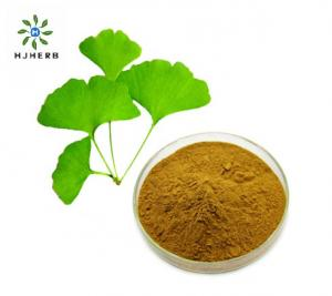 China Water SolubleNatural Ginkgo Biloba Leaf Extract Powder on sale
