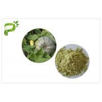 Quality Vegan Protein 50% 60% Natural Dietary Supplements Ecocert Certified Organic Pumpkin Seed Protein Powder wholesale