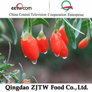 Quality 2014 crop Himalayan Certified Organic Goji berry, Tibet goji berry wholesale