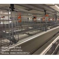 China Low Carbon Steel Material Automatic Battery Chicken Layer Cage For 96 Birds Sale on sale
