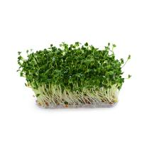 China Functional Food Broccoli Sprout Powder Apply To Anti Cancer, 2 Years Shelf Life  on sale