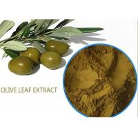 Quality Organic Olive Leaf Extract For High Blood Pressure ,  Pure Olive Leaf Extract Super Strength wholesale