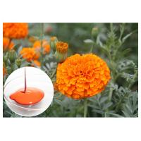 Quality CAS 127 40 2 Lutein Marigold Flower Extract , Marigold Extract Powder For Tablets wholesale