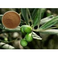 Quality CAS 32619-42-4 Cosmetic Raw Materials Olive Leaf Extract Powder For Digestive System wholesale