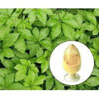 Quality Gynostemma Extract,Jiaogulan,Light brown to yellow powder,Herbal Extract/Plant Extract wholesale