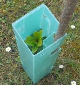 Quality 2mm 3mm Corflute Tree Guard / Vine Guard / Tree Shelter wholesale