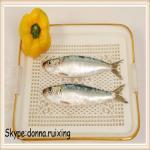 Quality board frozen 8-10pcs/kg sardine fish for bait wholesale