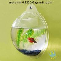 Quality acrylic wall mount fish bowl wholesale