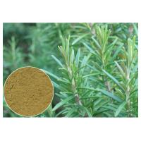 Buy cheap Ursolic Acid Rosemary Herbal Plant Extract Anti Oxidation For Cosmetic CAS 77 52 1 from wholesalers