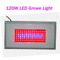 Quality OEM Customized Led Plant Growing Lighting 120W AC85 - 265V Red / Blue 300mA wholesale
