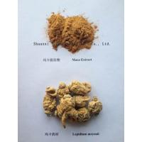 Quality Maca Extract  10:1 TLC Brown powder wholesale