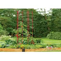 Quality Metal Garden Tomato Plant Stakes  Pack size  L73 Pack size  h 36 Tall or Towering, You Need Our Ladder Trellis wholesale