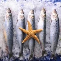 Quality Wholesale BQF Good quality frozen food sardine with 200-300g on Landing. wholesale