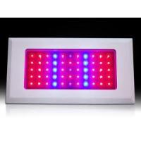 Quality 50w Environmentally Friendly 8:1 Ratio Of Red / Blue LED Plant Grow Lights wholesale