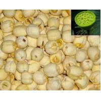 Quality Lotus seed Extract(Semen Nelumbinis Extract) against insomnia high quality wholesale