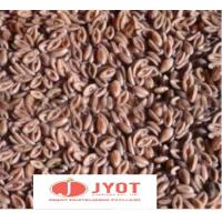 China PSYLLIUM SEED on sale