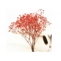 China Decorative Pressed Wedding Bouquet , Dried Flower Bouquet True Plant For Dining Room on sale