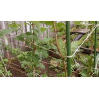 Quality Plastic Coated Plant Support Stakes wholesale