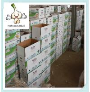 Quality supply new fresh red garlic in china 2015 Hot sale high quality Fresh Garlic wholesale