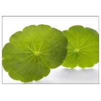 Cheap Skin Scars Anti-aging Gotu Kola Leaf, Centella Asiatica Extract for Cosmetic for sale