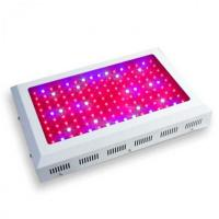 Quality 3 watt LED diode Grow Light hydroponic wholesale wholesale