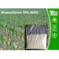 Quality Nicosulfuron 75% WDG Selective Herbicide For Maize Annual Grass Control wholesale