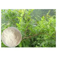 Quality Dihydromyricetin ease alcohol syptoms Ampelopsis grossedentata Extract powder wholesale