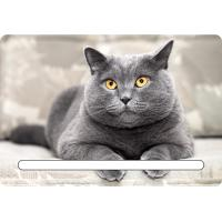 Quality Custom 7x11cm Lovely Cats 3d Fridge Magnets With Notepad For House Refrigerator wholesale