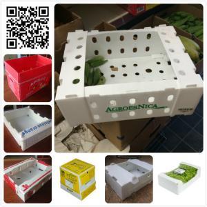 Quality 5kgs 10lbs pp corflute coroplast vegetable fruit packaging box wholesale