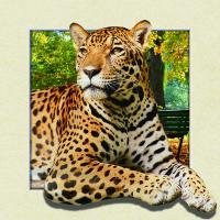 Quality Custom Lenticular Image Printing For Gift , 5d Animal Collage Poster 15.7x15.7 Inches wholesale