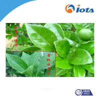 Quality Agricultural silicone surfactants IOTA-2000 wholesale