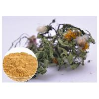Quality Flavones Dandelion Root Extract Powder For Diuretic Whole Herb Extraction wholesale