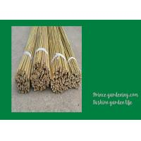 Quality 6 Foot Strong Long Bamboo Garden Stakes Nature Straight 6 - 8mm wholesale