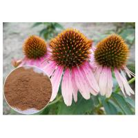 Quality Echinacea pururea Antifungal Plant Extracts Polyphenol Powder Form Improving Immune System wholesale
