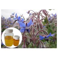 Quality Natural Extract Borage Oil Liquid Omega 6 , Borage Oil For Skin And Hair Hexane Refining wholesale