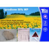 Quality Systemic Fungicide For Apple Trees / Berry Fruit , Iprodione 50% WP wholesale