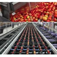 China Concentrated Apple Juice Fruit Juice Processing Plant on sale