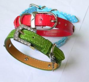 Quality China Personalized Dog Collar wholesale