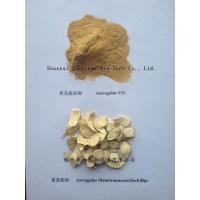 Quality Astragalus Extract Polysaccharide 50%, Methyl glycoside 0.2%, raw powder manufacturer wholesale
