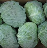 Buy cheap Fresh Cabbage from wholesalers